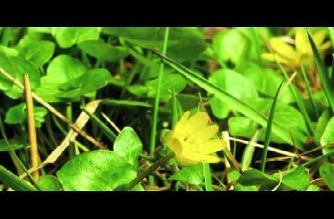 Kameronessi - Morning Dew (Video) *HD*